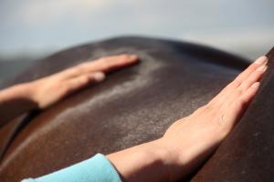 mijn paard is kreupel