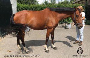 paard stress verhuisd verhuizing massage equus resultaat
